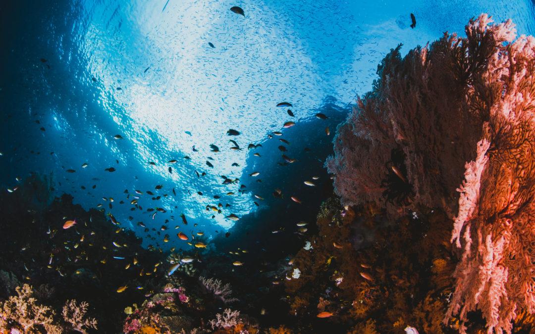 El cuidado de los ecosistemas marinos y su biodiversidad