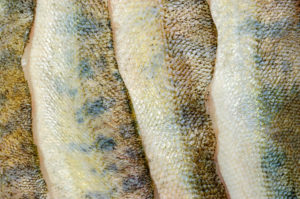 Mejoras laborales para los pescadores: guía fácil, merluza