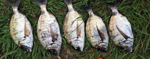 Sargo, el pescado azul para saborear el invierno