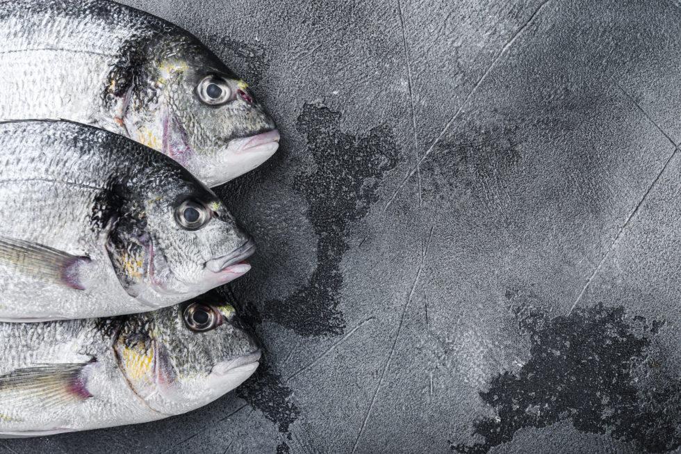 Dorada, un pez con carácter