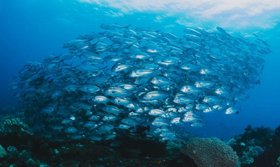 Las ayudas del fondo europeo de pesca favorecen a Galicia y el sector