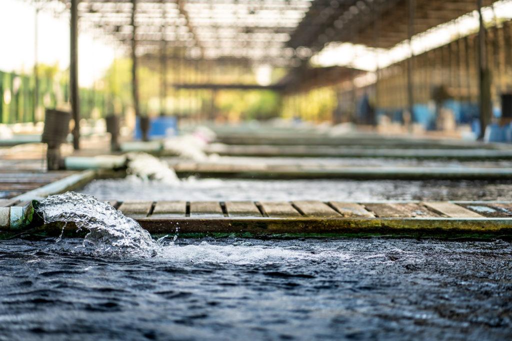 Ayudas para PYMES de transformación de productos del mar